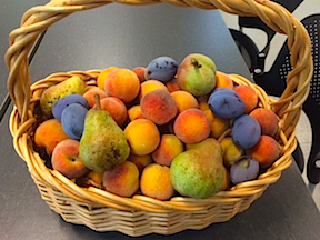 fruit basket 2015