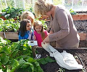 ladybugs in bag, kids, Colleen