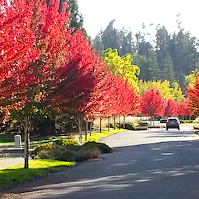 fall colors 6 PCC street