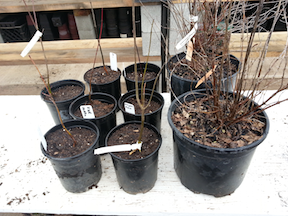 potted donation trees
