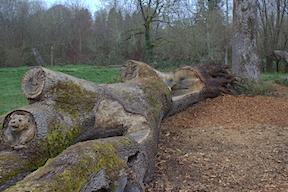 Jane's Park bear