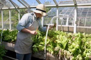 Meet our Urban Farm Assistant